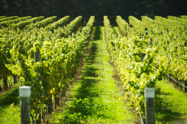 Gaia Vineyard Frost Protection Solution